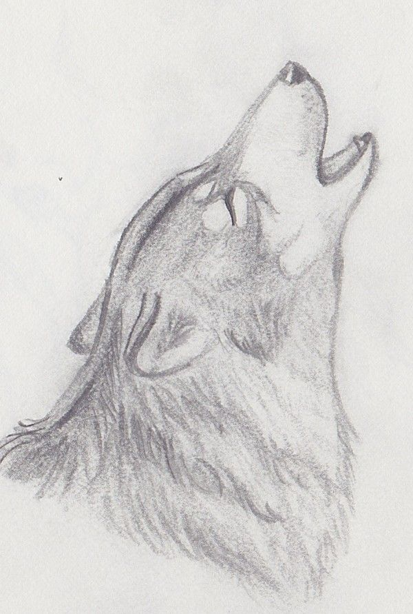 I Draw This Wolf But It Was Thrown Away When I Was Cleaning My