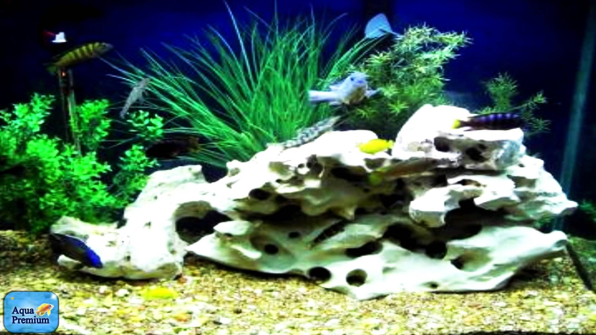 Great Cichlid Tank With Texas Holey Rock