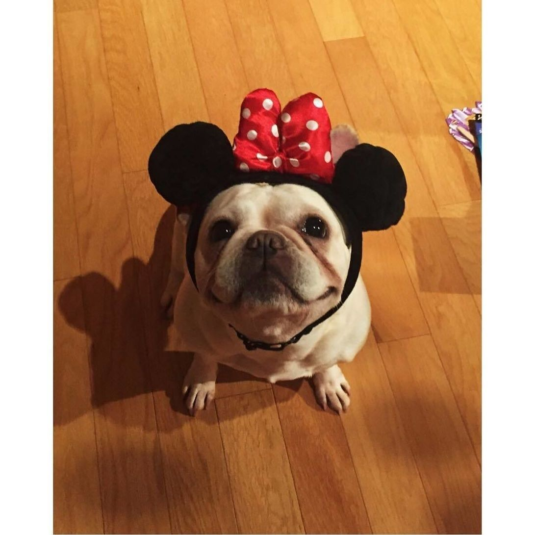 Im Going To Disney World Visit Our Page For Daily Bulldog