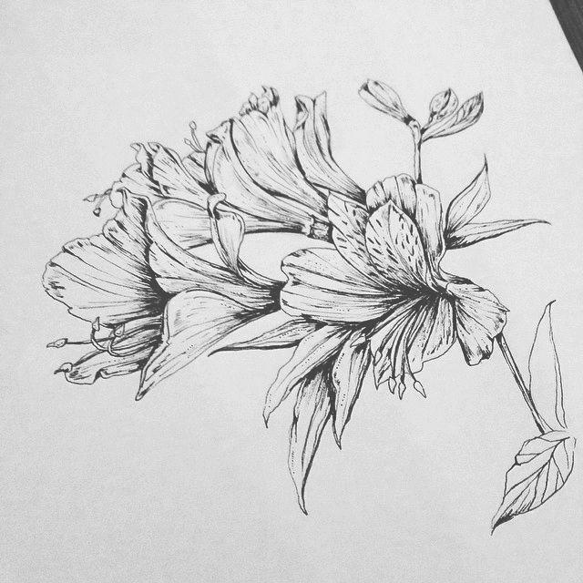 Alstroemeria Inca Tattoo Flower Line Drawings Flower Tattoo Sleeve