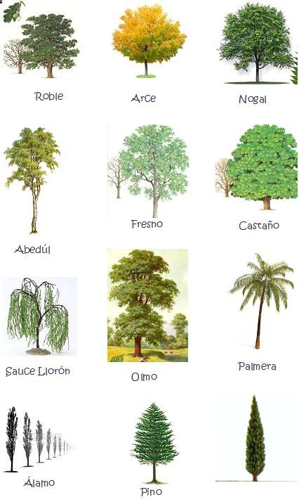 Tipos de arboles y sus nombres buscar con google - Clases de flores y sus nombres ...