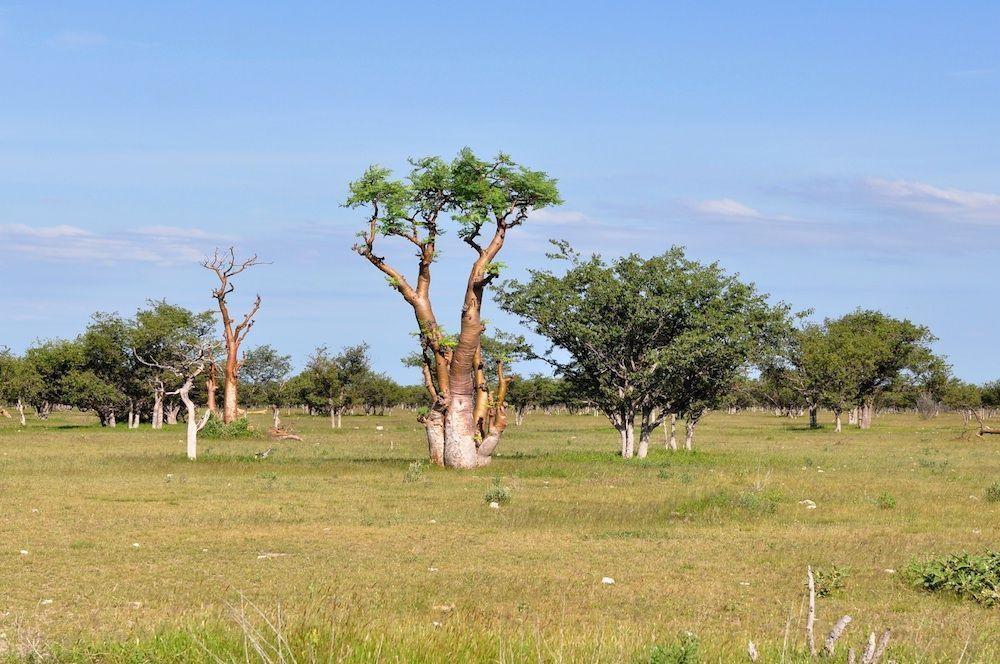 Etosha National Park in Namibië