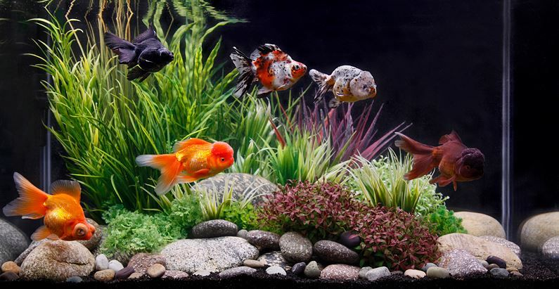 Image result for filters for a goldfish tank