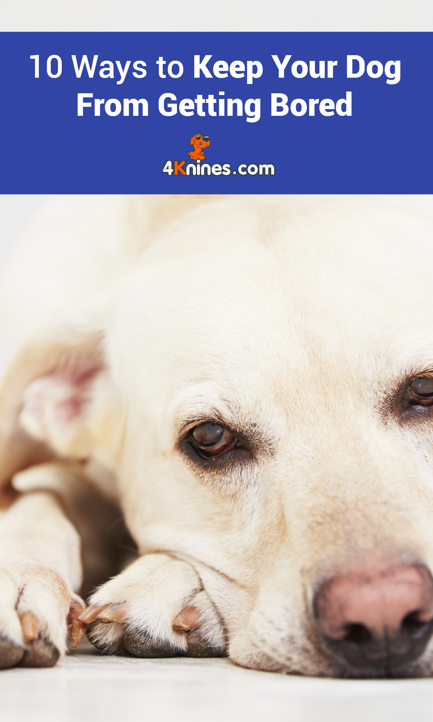 10 Ways To Keep Your Dog From Getting Bored Dogs Your Dog Dog Enrichment