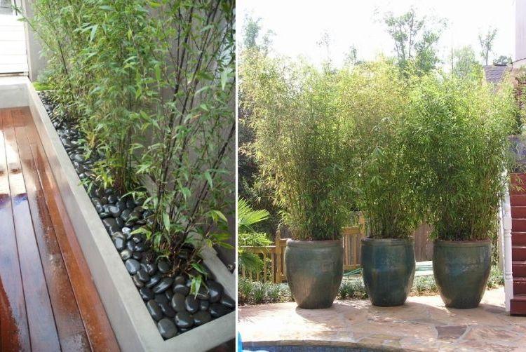 Kann ich Bambus im Kübel halten? - Balkon, Haus & Garten - ZENIDEEN