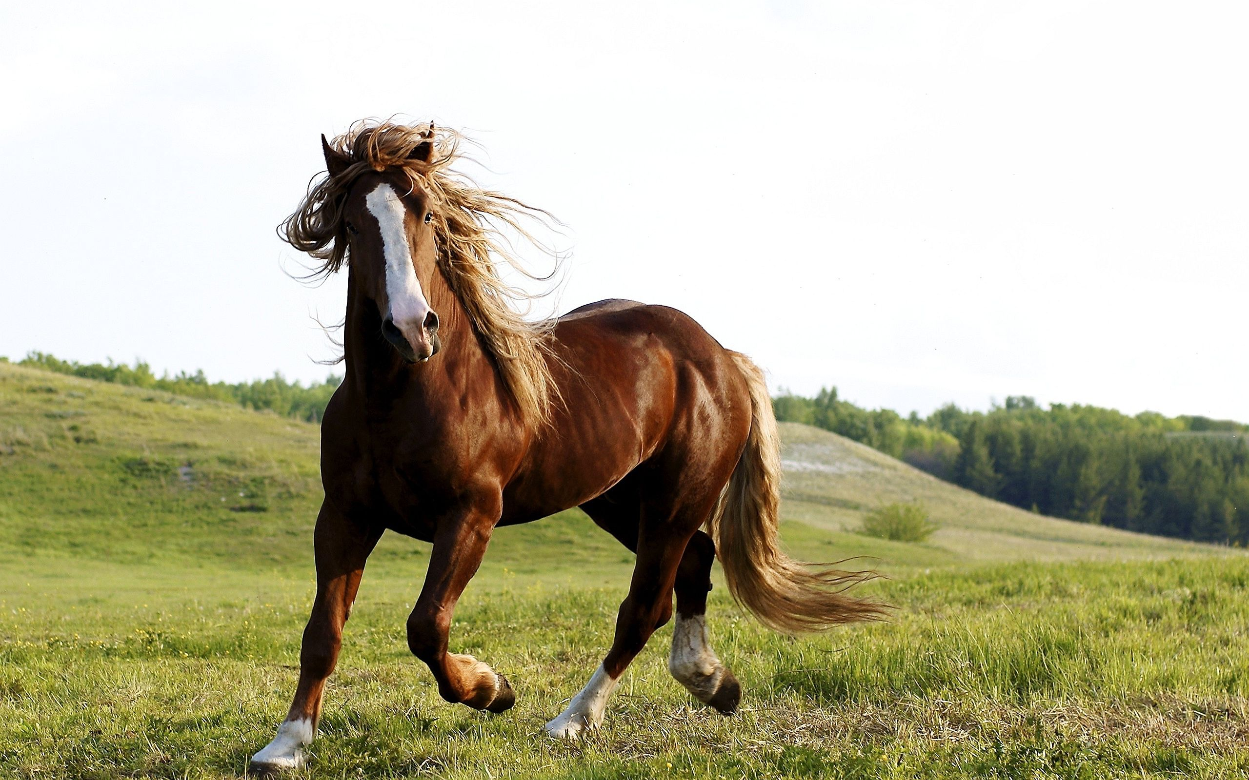 Stallion Horse wallpaper Brown horse Wallpapers Pictures