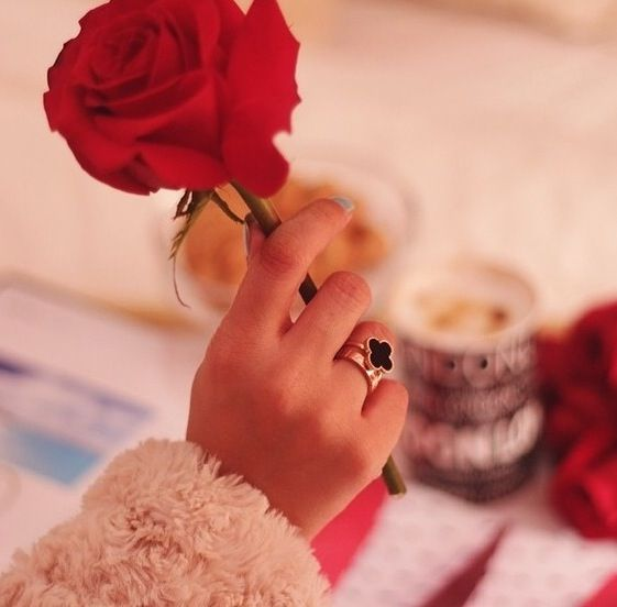Red Rose In Hand Rose In Hand Hand Holding Rose Flowers Dp