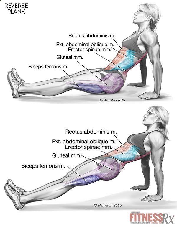 Aperte seu núcleo e inferior do corpo com tábuas reversa