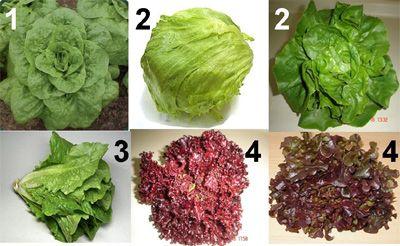 Lechugas Frutas Y Verduras Tipos De Lechuga Verduras