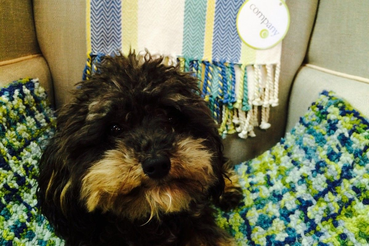 This Adorable Dog Is A Fan Of One Of Our Partner Stores In Home In Exeter Nh Petsofpinterest Dogsofpinterest Rugs Te Furry Friend Pets Animal Pictures