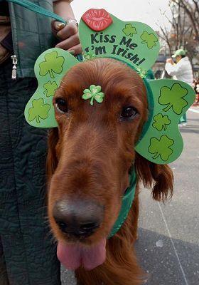 When Irish Dogs Are Smiling Irish Dog Irish Dog Breeds Irish