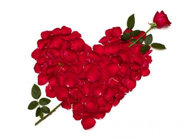 Freepik Graphic Resources For Everyone Rose Flower Wallpaper Red Rose Petals Rose Day Wallpaper
