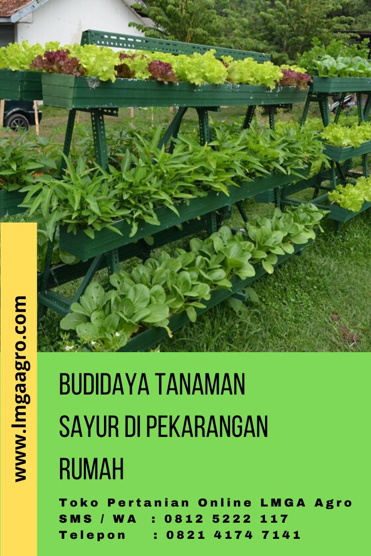 Teknik Budidaya Sayuran : teknik, budidaya, sayuran, Budidaya, Tanaman, Sayur, Pekarangan, Rumah, Sayuran,, Tanaman,