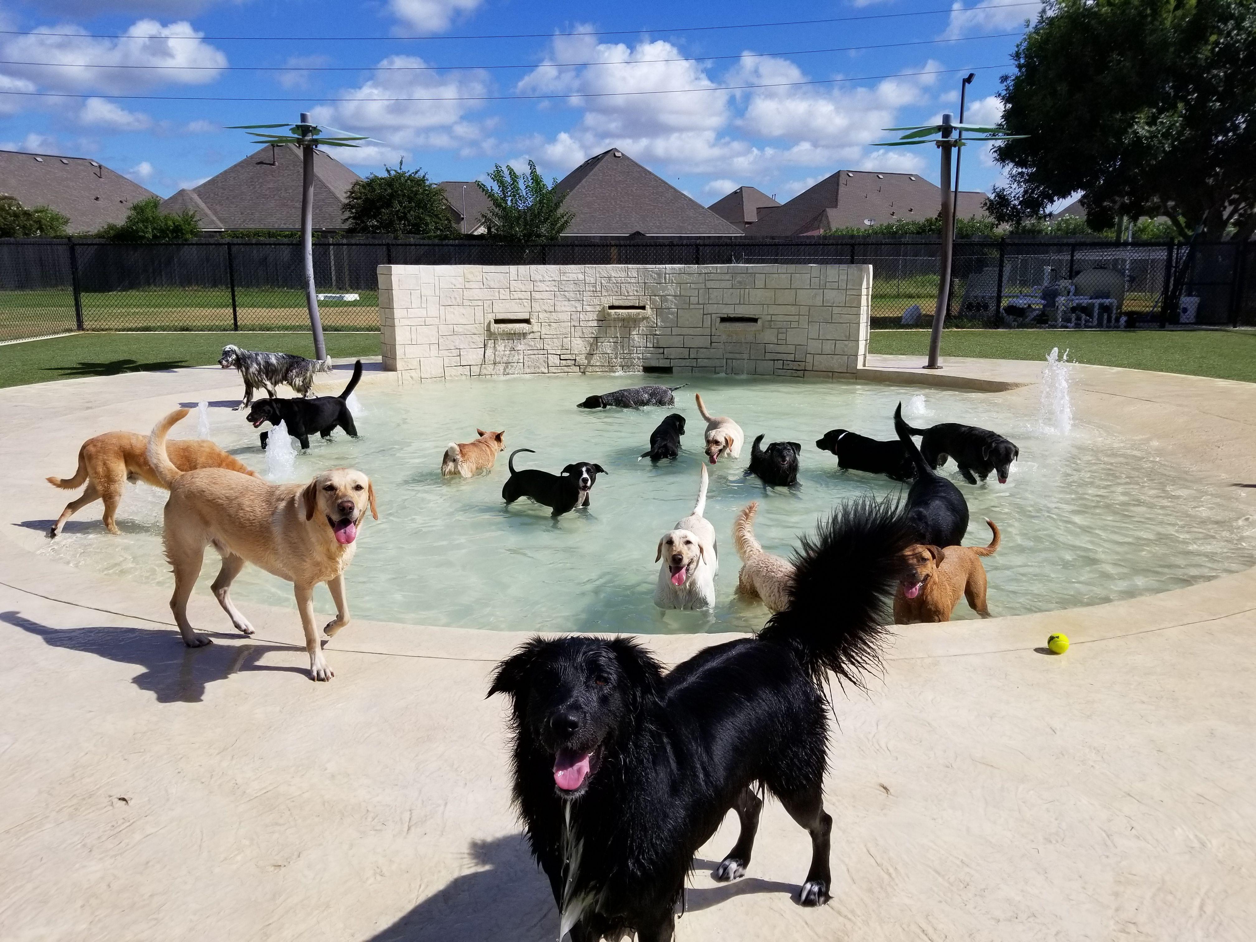 Pet Resorts Luxury Doggie Pool At Rover Oaks Pet Resort In Katy Texas Rover Pet Resort In 2020 Pet Resort Dog Pool Luxury Pet