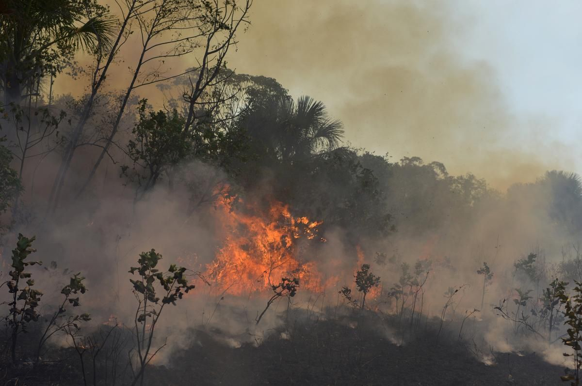 Brazil Deforestation Rises In August Adding To Amazon Fire