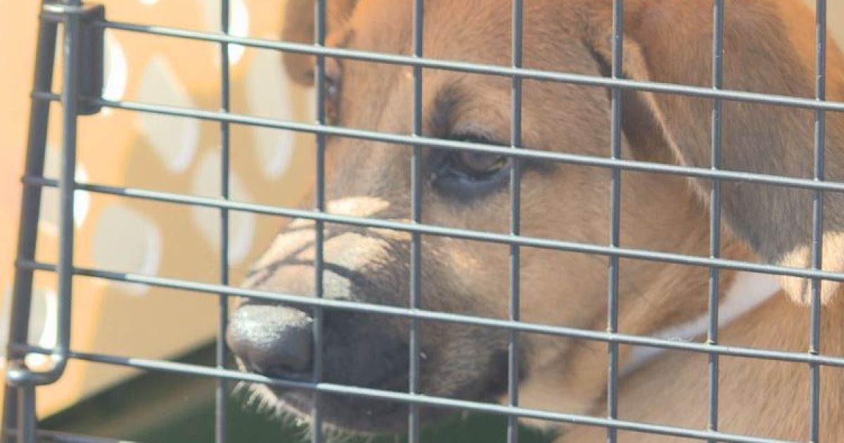 Nashville Humane Association needs fosters after taking in