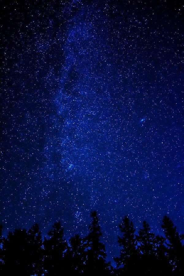 Milky Way and Trees by Pelo Blanco Photo