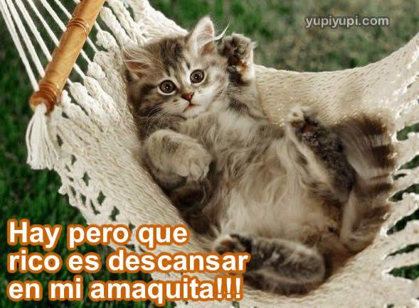 Gatito descansando rico!