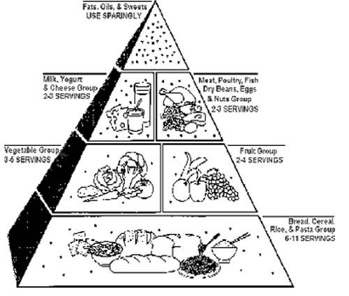 Food pyramid essay