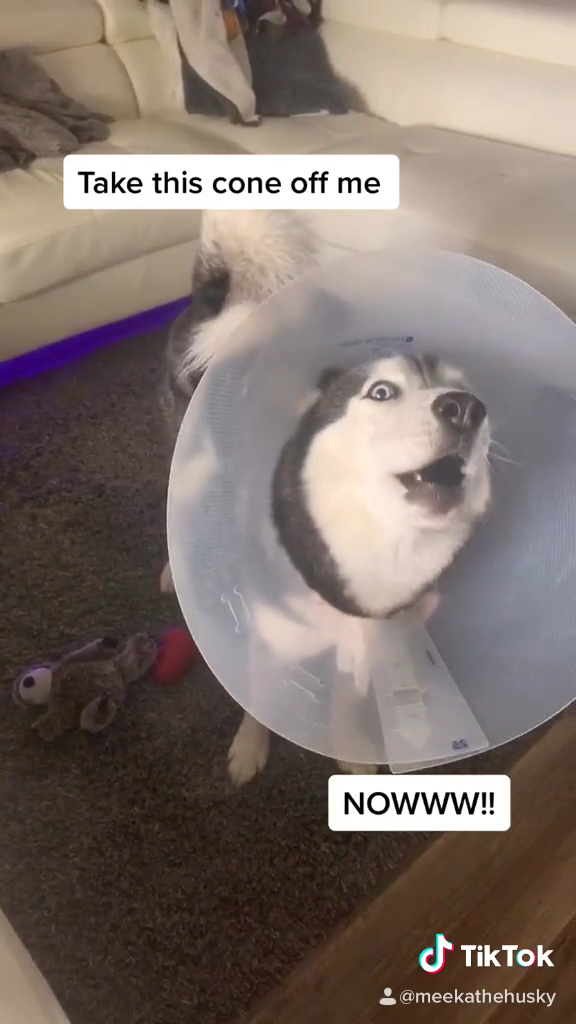 Meeka Wanted The Cone Off So Bad!