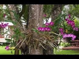 Resultado de imagem para orquideas em madeiras