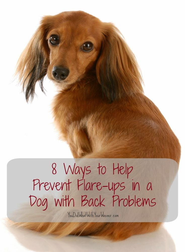 How To Help A Dog With Back Problems Dachshund Quotes Dogs