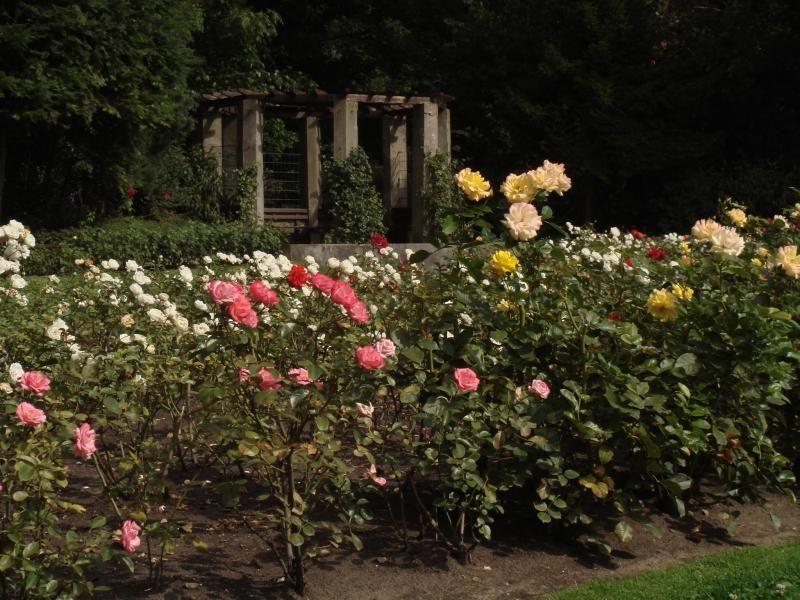 Kolner Grunanlagen Der Rosengarten Auf Dem Fort X Rosengarten Garten Schone Orte