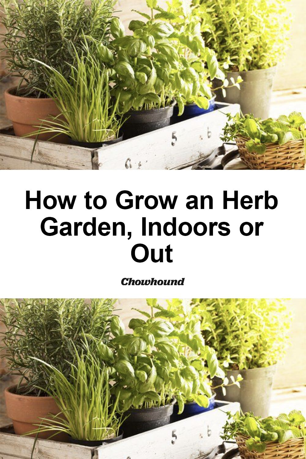 How To Grow An Herb Garden Indoors Or Out Outdoor Herb Garden Indoor Herb Garden Vertical Herb Gardens