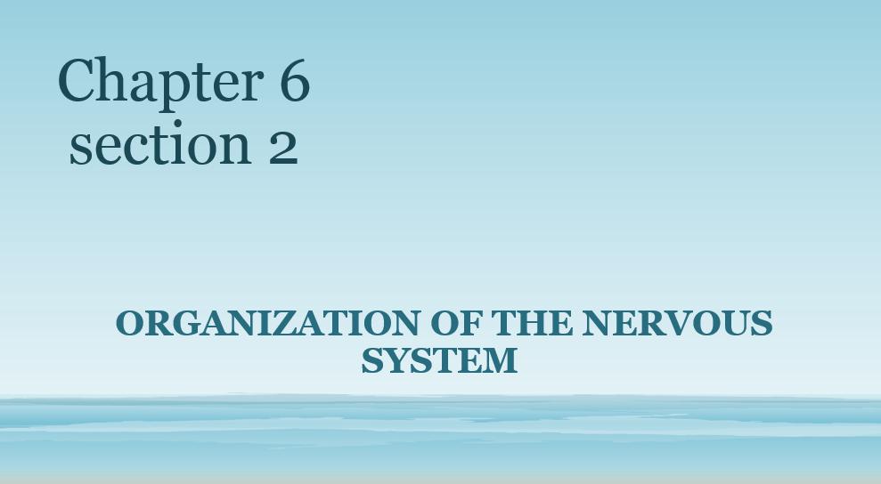 الأحياء بوربوينت Organization Of The Nervous System بالإنجليزي للصف العاشر Nervous System Nervous System