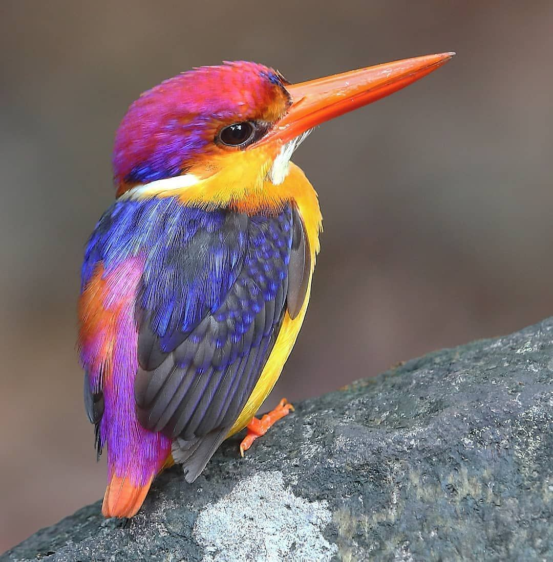 4,268 Likes, 37 Comments Best bird pictures