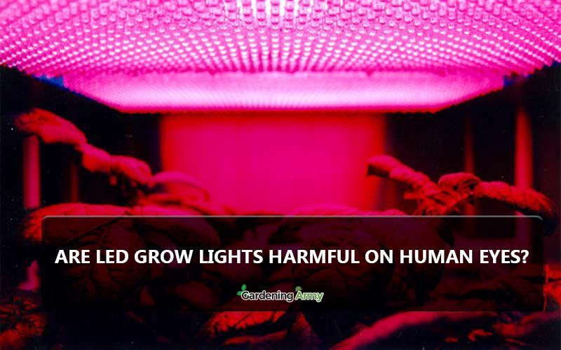 Are Led Grow Lights Harmful On Human Eyes Led Grow Lights Grow Lights Led Grow
