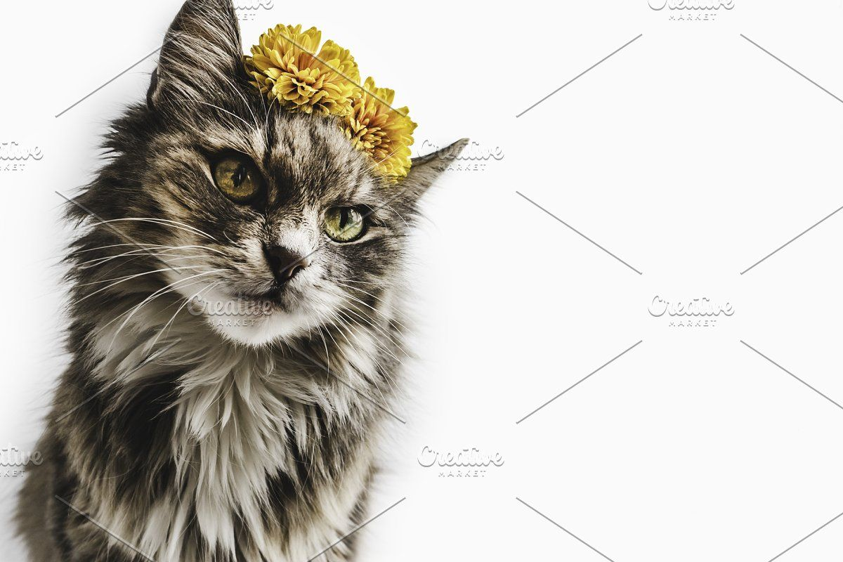 Charming Kitten With Yellow Flowers In 2020 Yellow Flowers Kitten Flowers