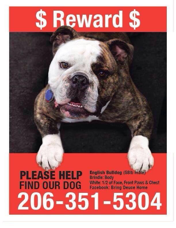 Lostdog Seattle Wa English Bulldog 206 351 5304 Https Www