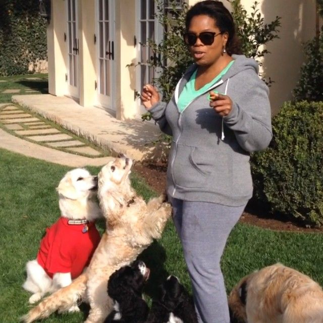 National Pet Day with #Oprah!! Best treat any animal can get is to not be eaten. Give all animals a treat - don't eat one today - yeah!