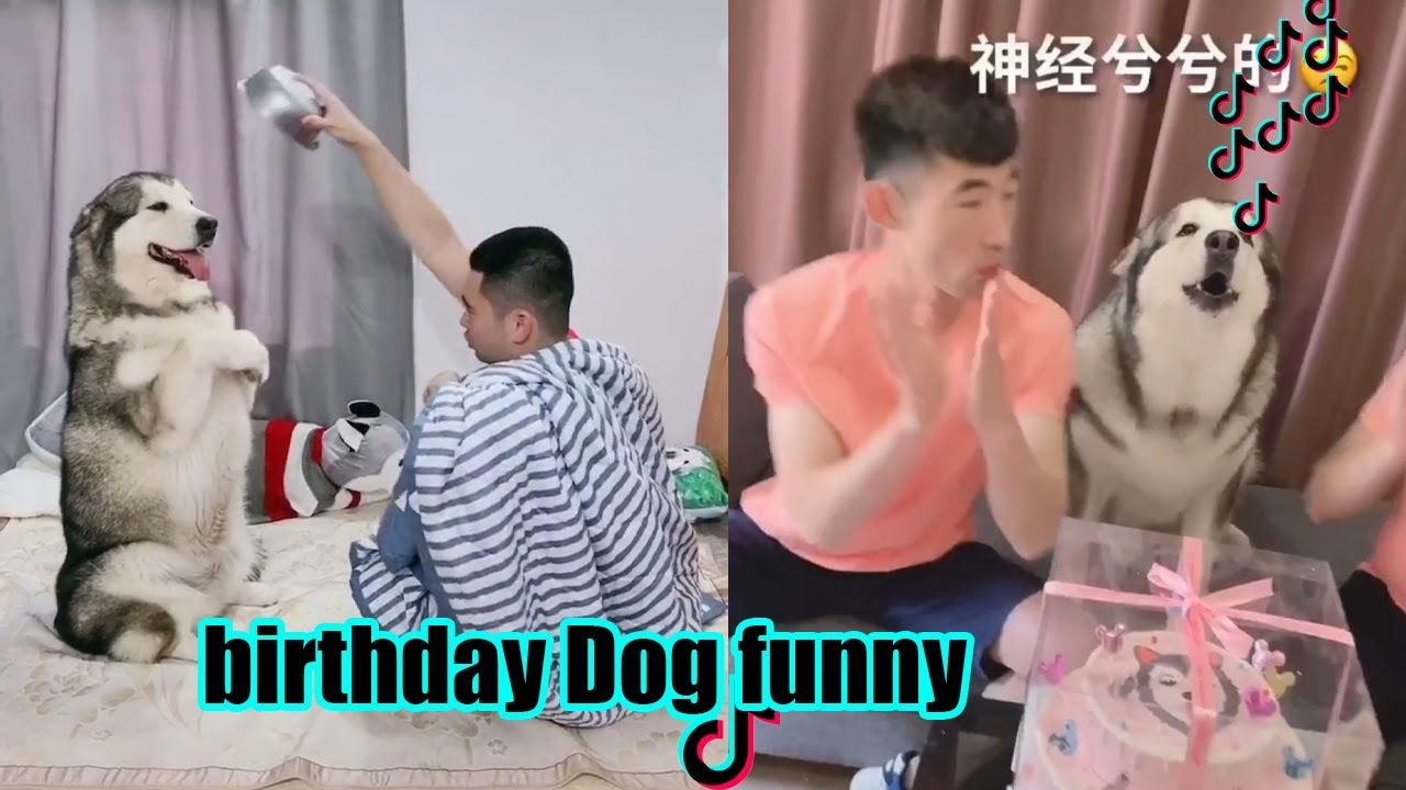 New Funny Dog In Tik Tok Surprise Dog Happy Birthday And Sing Song Surprised Dog Funny Dogs Songs To Sing