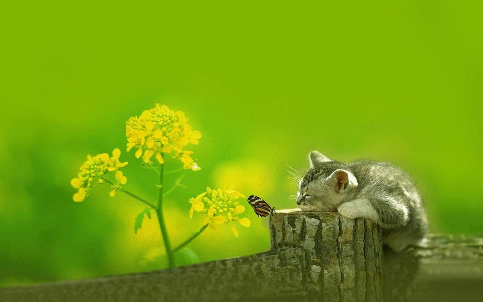 Best Wallpaper Cat Butterfly - 06d19023198493e129ac4ea2f26a1834  2018_194758 .jpg