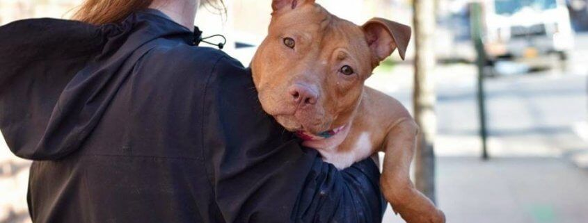 A Last Hug For Samosa Puppy Slated To Die At Nyc Shelter With Images Animal Rescue Puppies Pets