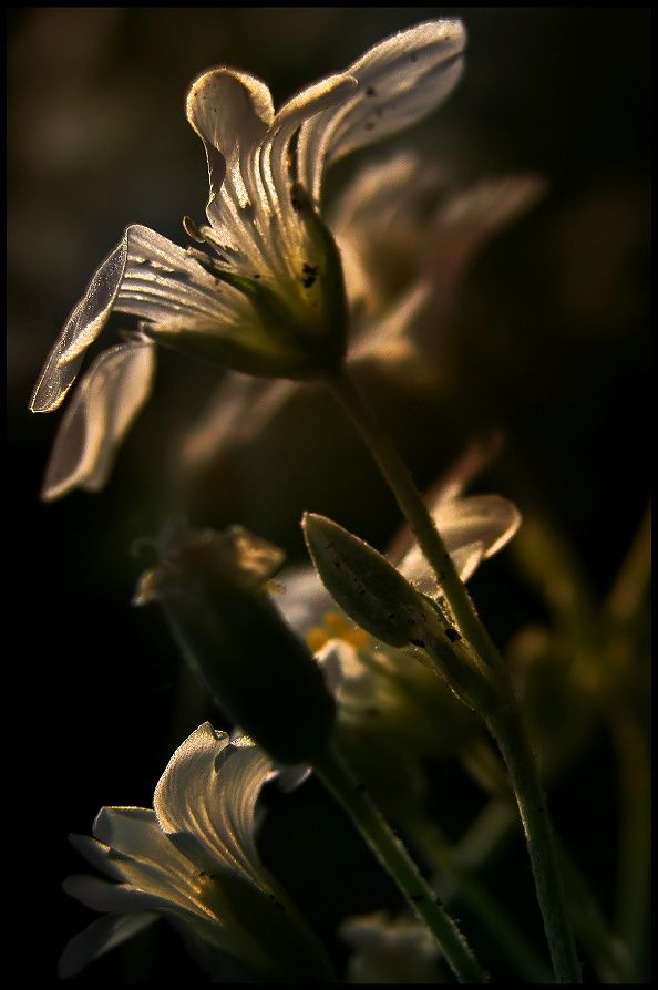 crescentmoon0666:  Glimpse of the Sun by EMERALD WAKE © on 500px