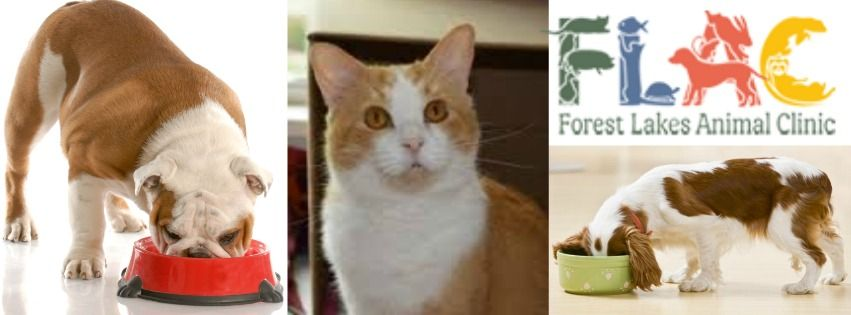 Best Pet Food Store in Sarasota Pet clinic, Lake animals