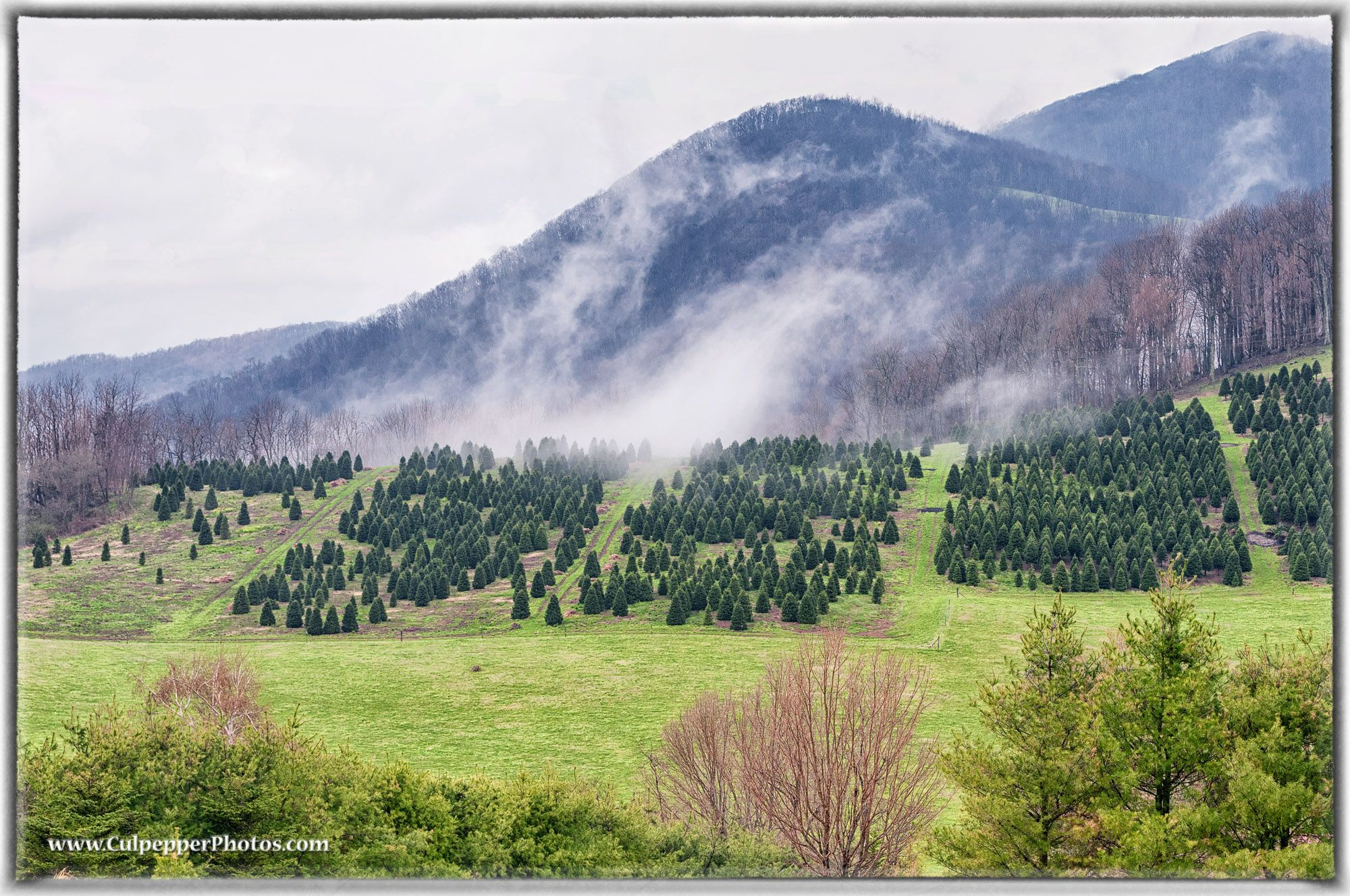 One more photo of a Christmas tree farm near Boone North Carolina. Photo from April 2014 at an ...