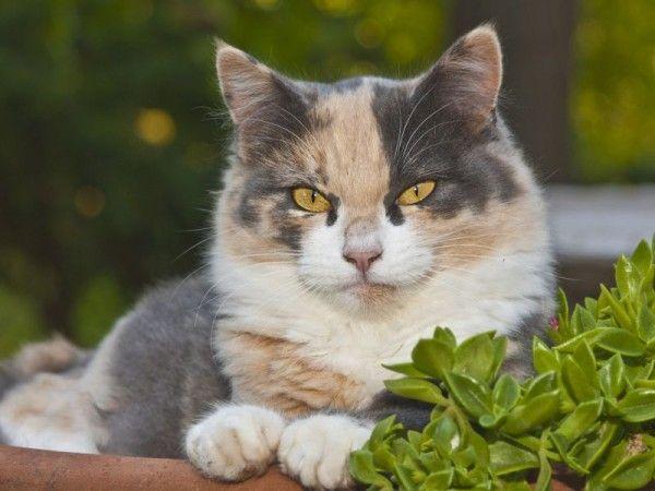 Katzenfreundliche Pflanzen für Balkon und Wohnung Katzen