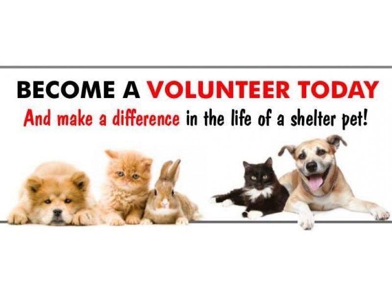 Volunteer At The Stratford Animal Shelter Animal Shelter