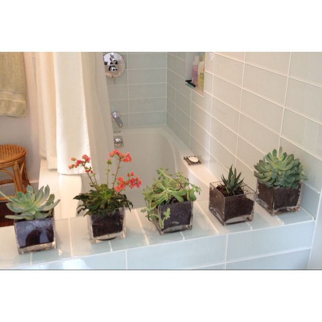 Succulents In Bathroom Plant In Glass Succulents Indoor Garden