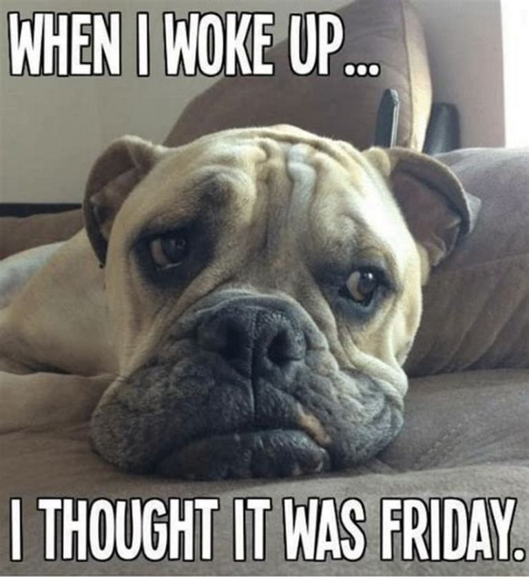 101 Funny Thursday Memes That Work Day And Night To Make You Happy Good Morning Dog Funny Dogs Animal Memes