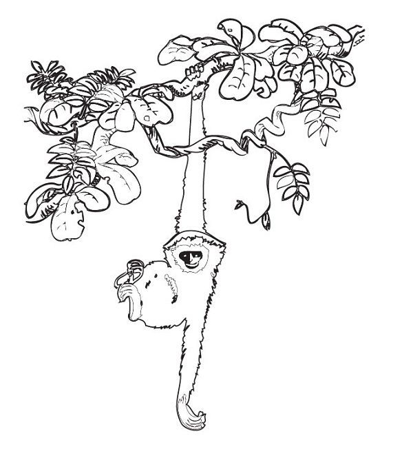 rainforest animal coloring book pages   coloring kids   Tree ...