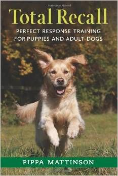 Keep Your Dog Close On Walks And Improve His Recall Dog Training