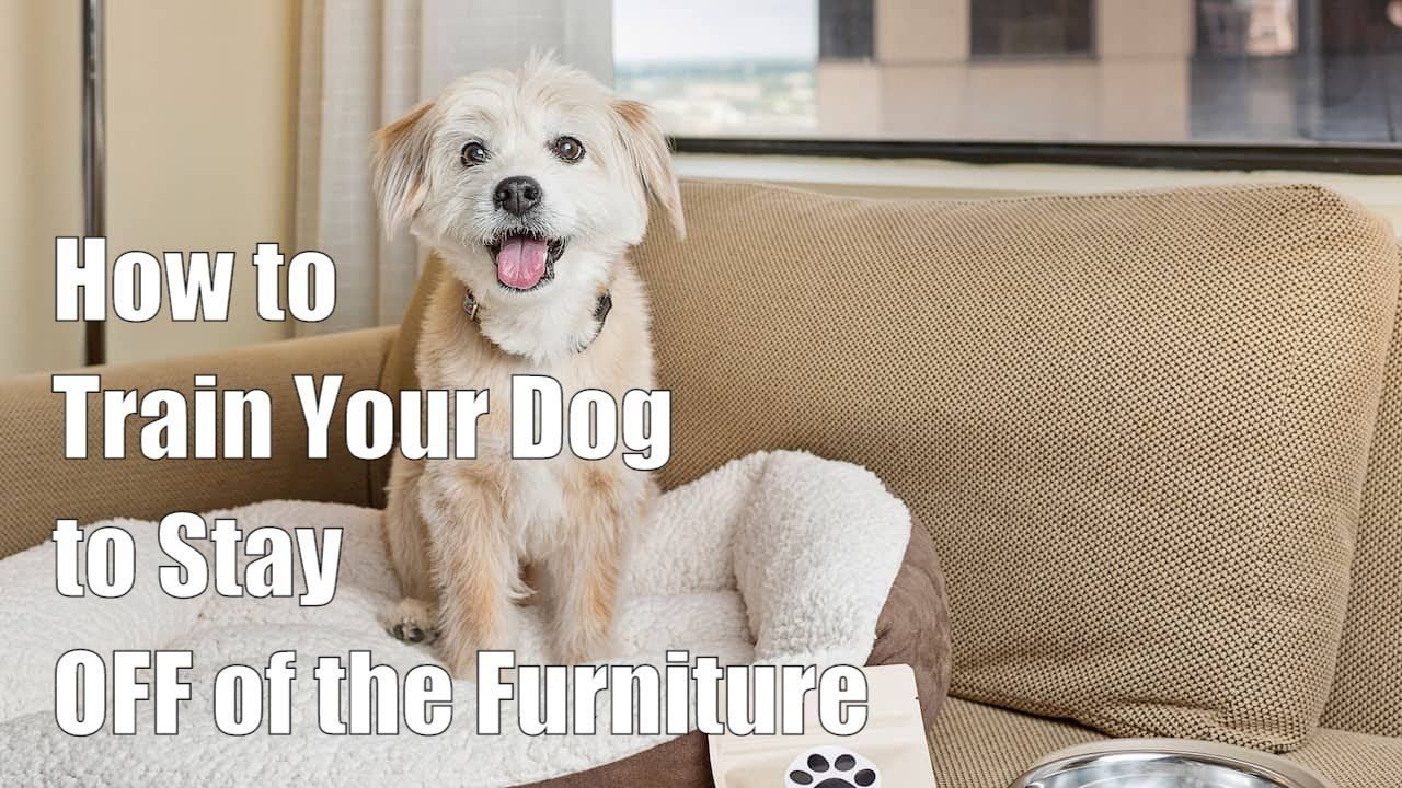How To Train Your Dog To Stay Off Of The Furniture Dogs