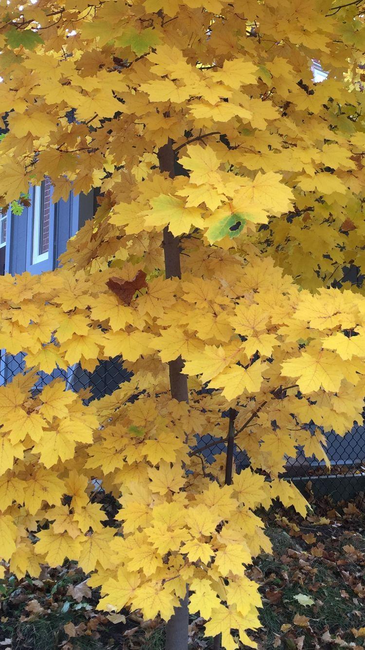 More yellow foliage
