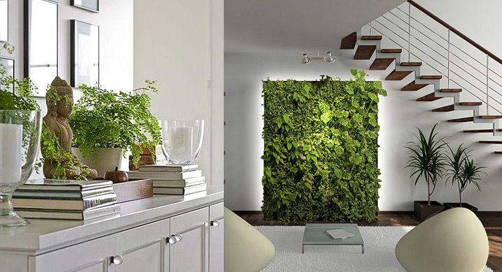 Cinco beneficios de las plantas en ambientes interiores for Cuales son las plantas para interiores