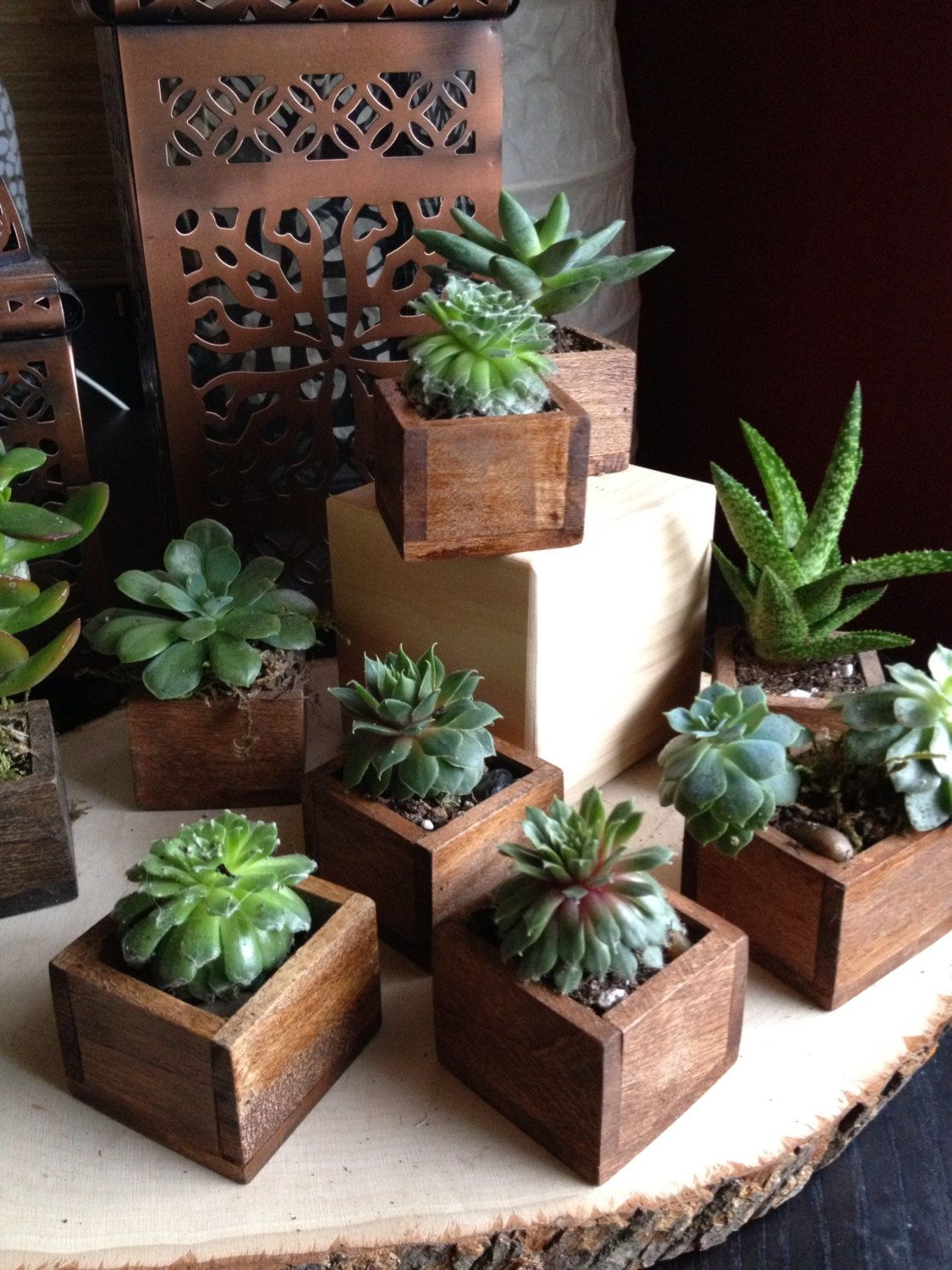 10 Succulents In Tiny Wooden Boxes Stained Chestnut Expresso Or White For The Cutest Gifts Home Dec Plant Display Ideas Succulents Diy Wood Succulent Planter